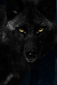 Out of the Shadows wolf Bethany Shaw