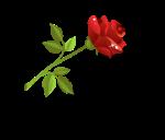 rose divider 1