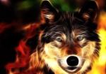 animated-hd-wolf-wallpaper